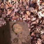 IMAG0471-150x150 Robert Davis 31.09.1944 Petrilaca