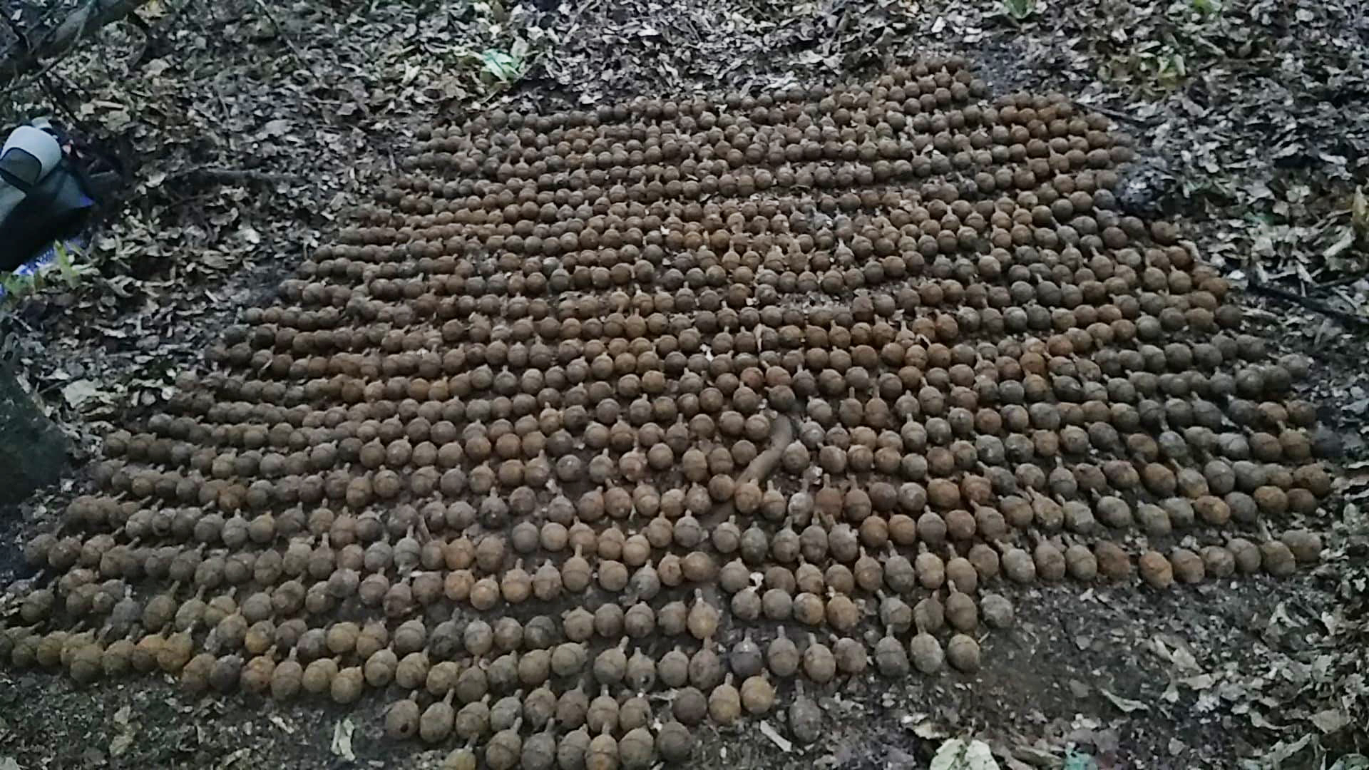 """1087 de grenade defensive descoperite de membrii  asociatiei detectoristilor """"Vrancea Eroica"""""""